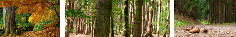 forestry_group